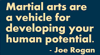 Martial arts are a vehicle for developing your human potential